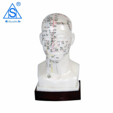 Acupuncture head model 20CM pvc material chinese model